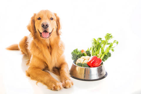 Cani, quali sono le diete più diffuse in commercio?